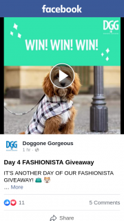 Doggone Gorgeous – Win a Dgg Fashionista Pack Including