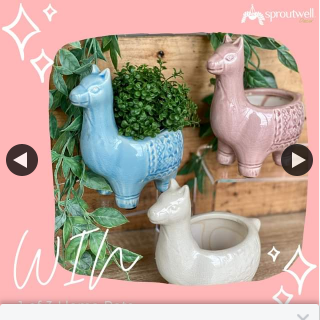 Sproutwell Decor – Win 1 of 3 Llama Pots Enter Our Monthly Giveaway