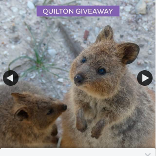 Quilton Everyday Love – Win a $50 Gift Voucher and Some Super Soft Quilton