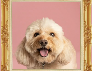Rufus & CoCo – Win a Custom Art Piece of your Furry Mate (there are 6 prizes to be won)
