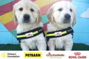 Seeing Eye Dogs – Win a $2,000 shopping spree PLUS dog food for 12 months
