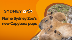 Channel Seven – Weekend Sunrise – Win 1 of 4 prize packs including a Family pass to Sydney Zoo